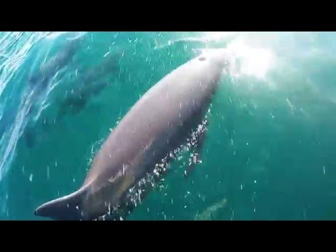 GoPro – Dolphins of Puerto Escondido, Mexiko