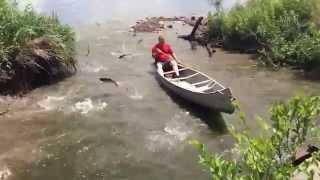 Смотреть онлайн Рыба сама прыгает в лодку рыбаку