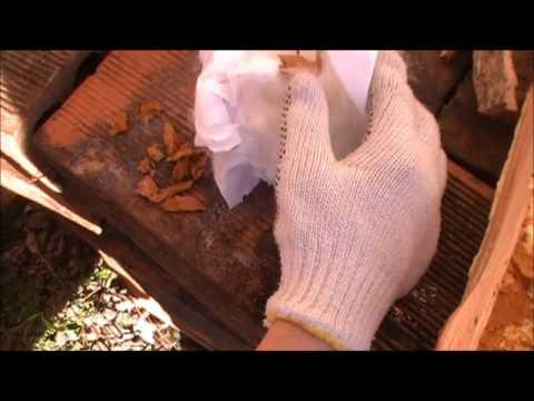 Dano de um tratamento de fungo de prego