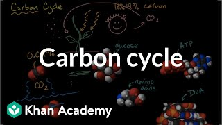 Carbon cycle  | Ecology | Khan Academy