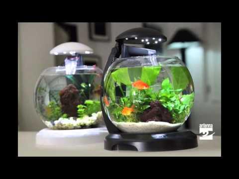 I segreti dei pesci rossi
