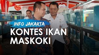 Pemerintah Kota Jakarta Pusat Gelar Kontes Ikan Hias Maskoki
