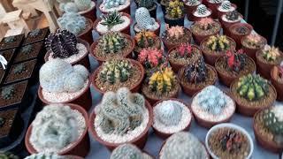 Plant Lover's Paradise: Chatuchak Plant Market Tour