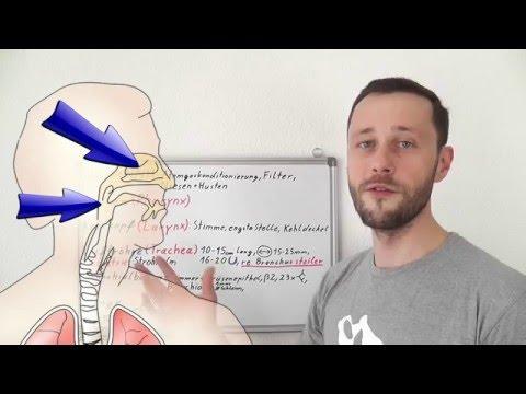 Die Lendenschmerzen links das häufige Urinieren dass es
