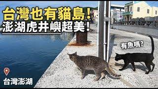 【台灣也有貓島!澎湖虎井嶼超美!】狸貓
