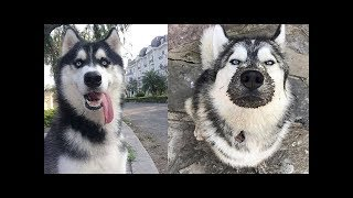 Funny animals compilation try not to laugh