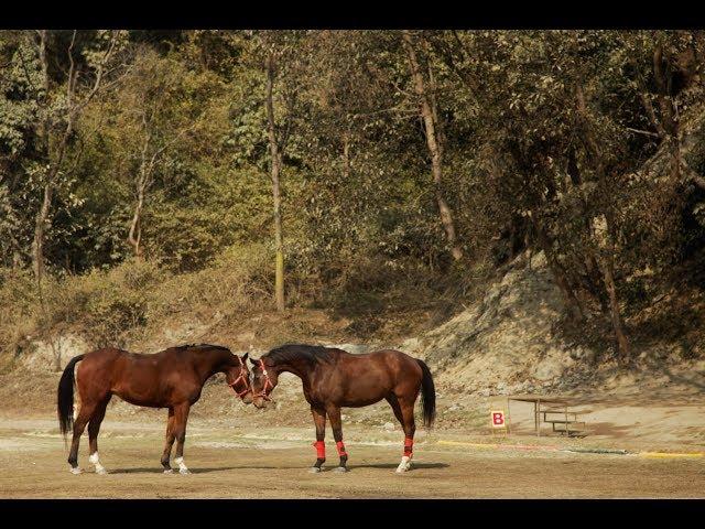 Developing a horse sense in Kathmandu