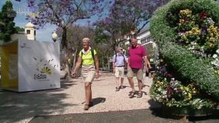Árboles de Jacarandá en flor 2016