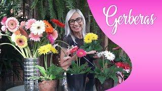Como Cuidar E Plantar Gerberas #paisagismo #jardinagem #jardim #gerberas #flores #floricultura