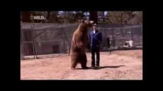 911 call Bear kills a man Warning graphic content