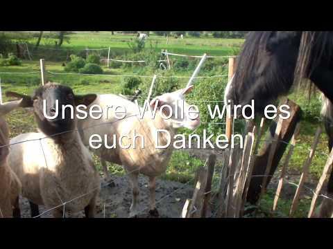 Wollwaschmittel selber machen, Waschmittel für Wolle schnell und umsonst