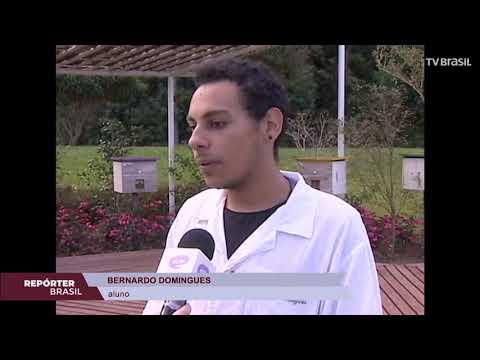 Projeto desenvolve pesquisa para preservar abelhas em Curitiba