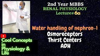 6a. RENAL : Water handling -1| Osmoreceptors | Thirst centres | ADH AVP| Guyton | Ganong | Constanzo