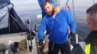 Исландия. рыбалка в исландии.