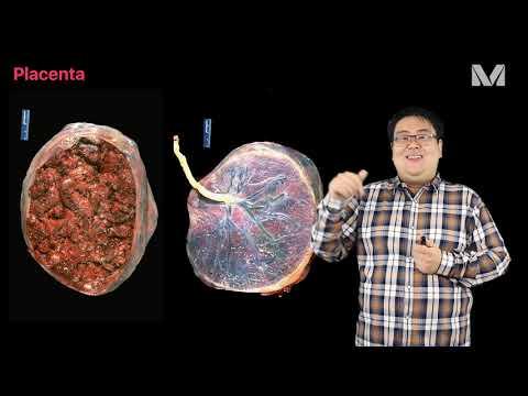 Magas vérnyomás a neurózis hátterében
