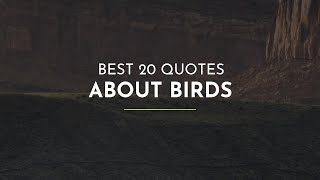 Best 20 Quotes about Birds ~ Everyday Quotes ~ Friendship Quotes ~ Happiness Quotes