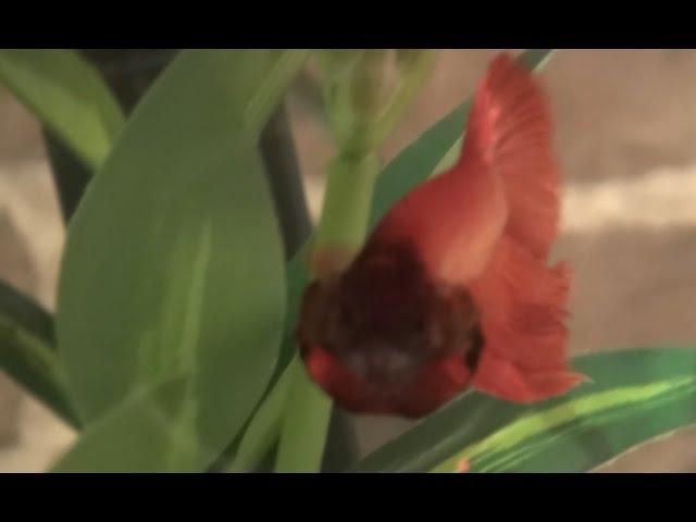 Welcome to BetterBetta! | Channel Trailer