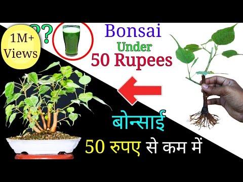 How to make Bonsai tree under 50 Rupees   Easily create bonsai at home
