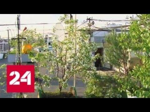 Коммунальщики уничтожили уникальный сад — Россия 24