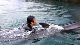 室戸ドルフィンセンターイルカのヒレにつかまって泳ぐ!dolphin