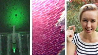 3 DIY Microscopes with a Laser Pen   Shed Science