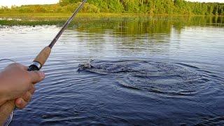 Запрет рыбалка в ростовской области