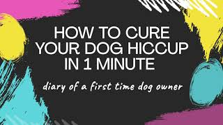 How to cure dog hiccup fast in 1 minute / Labrador puppies