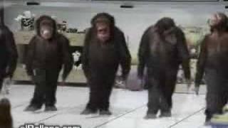 Cimilli Ibo - Sibelim ( Maymunlar )