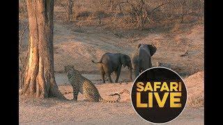 safariLIVE - Sunset Safari - September 4, 2018