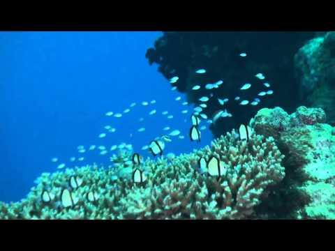 Die Fische von Yap, Yap allgemein,Yap,Mikronesien