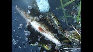 Озеро улагач челябинская область рыбалка