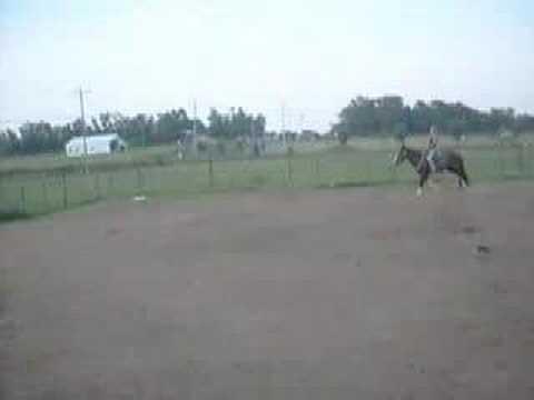 Música Cowgirl's Saddle