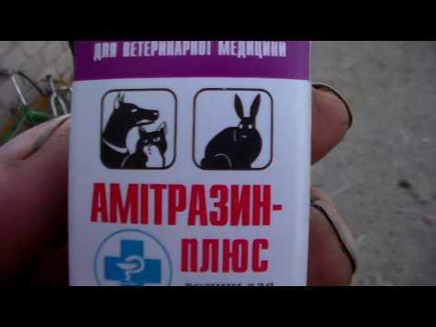 , title : 'Болезни кроликов ,клещи в ушах.Diseases of rabbits, ticks in the ears.