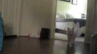 jack (jak) n: a mischievous cat that causes trouble