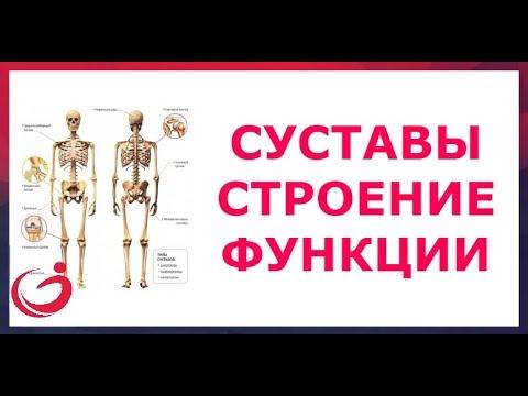 Аппарат для остеохондроз