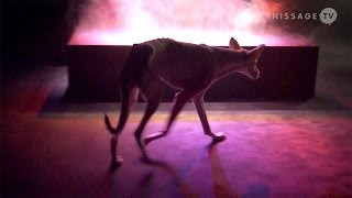 Pierre Huyghe Retrospective at Museum Ludwig, Cologne