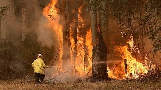 video: Bush fires hit Sydney as Australia braced for 'catastrophic' conditions