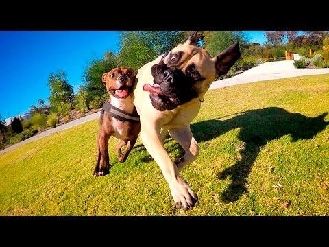 סרטון מקסים עם כלבים משחקים