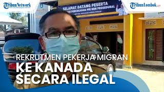 Disnakertrans NTB Hentikan Rekrutmen Pekerja Migran Ilegal ke Kanada oleh PT Yanbu Al Bahar