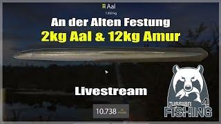 Russian Fishing 4: Amur Karpfen (12kg) und ein Aal (2kg) - An der Alten Festung   Livestream