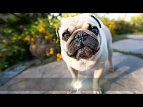 Любовный гороскоп собака на 2017 год женщина