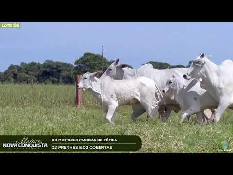04 MATRIZES COBERTAS - 02 PRENHES 02 COBERTAS