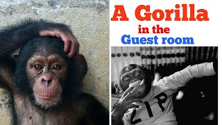 A Gorilla in the Guest Room 😱 - HINDI - Gerald Durrell  - clear explanation