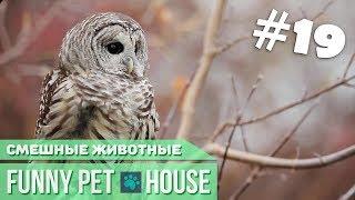 СМЕШНЫЕ ЖИВОТНЫЕ И ПИТОМЦЫ #19 ОКТЯБРЬ 2018 [Funny Pet House] Смешные животные