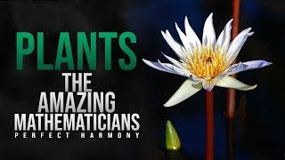 PLANTS - The Amazing Mathematicians (Perfect Harmony)