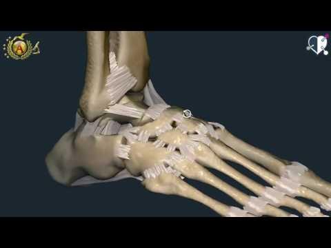 Rigidità articolare nelle ginocchia e mani intorpidite