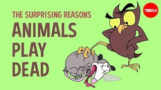 The surprising reasons animals play dead - Tierney Thys