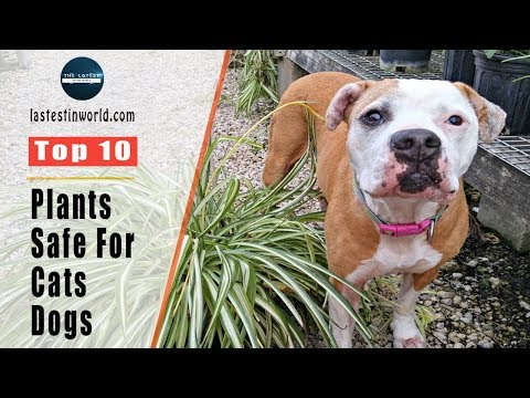 Top 10 Purifying Houseplants That Are Safe For Cats And Dogs