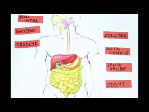 Schemat grupy mięśni człowieka