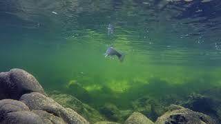 vancouver island fly fishing